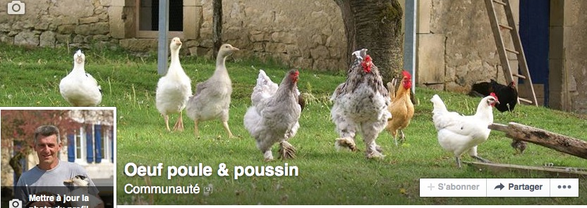 page facebook oeuf poule poussin