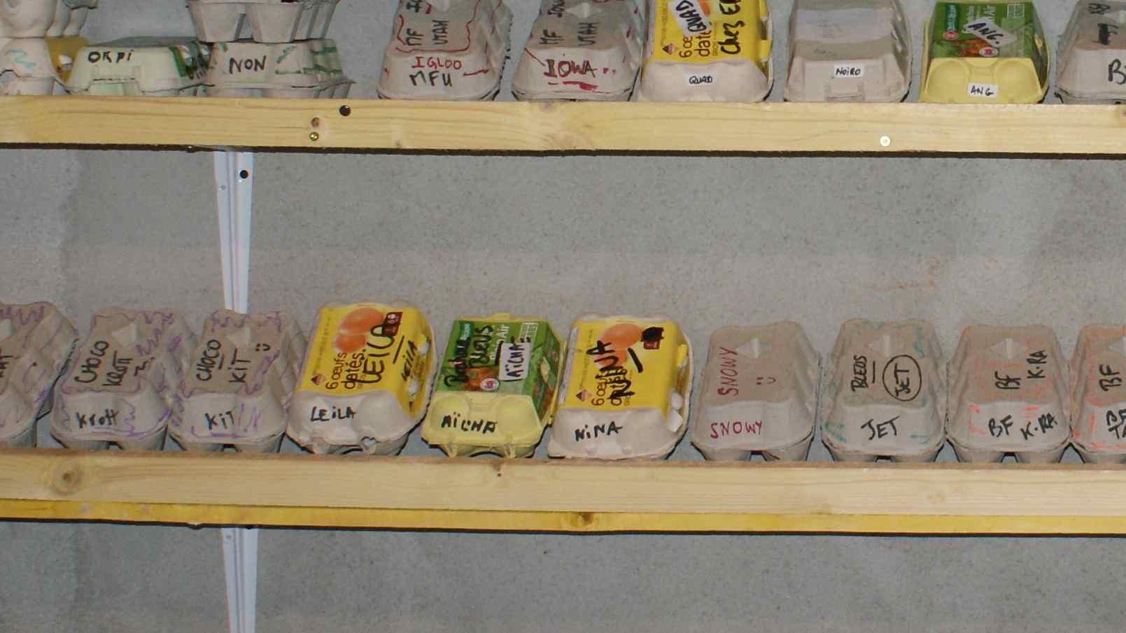Boites d'oeufs fécondés dans la pièce de stockage tempérée