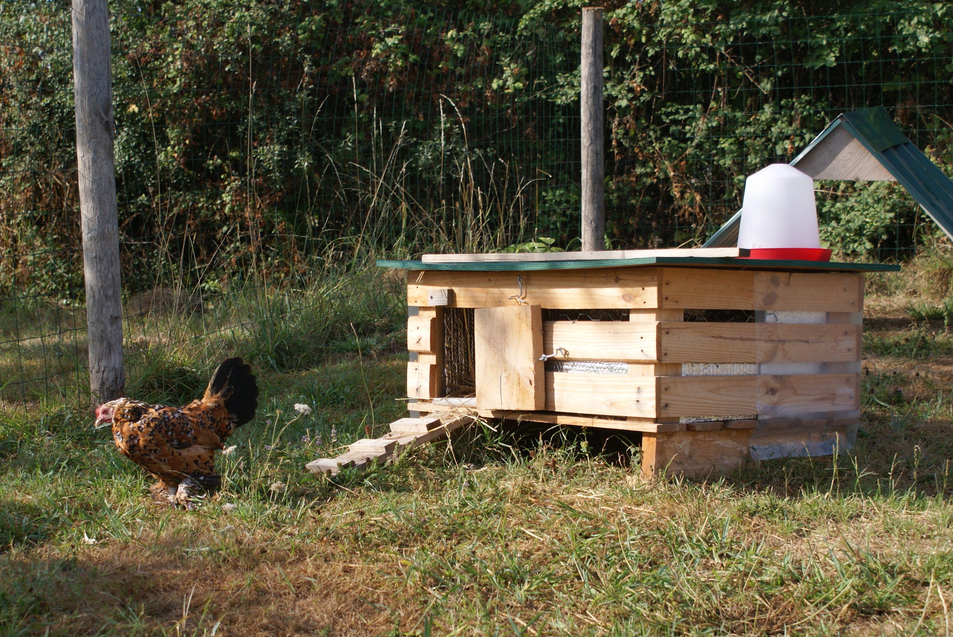 Les poulets sabelpoot millefleur for Oeuf de poule conservation