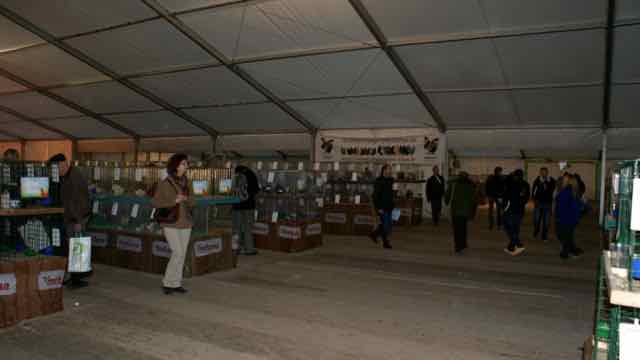 Hall des races naines à l'exposition avicole de Metz