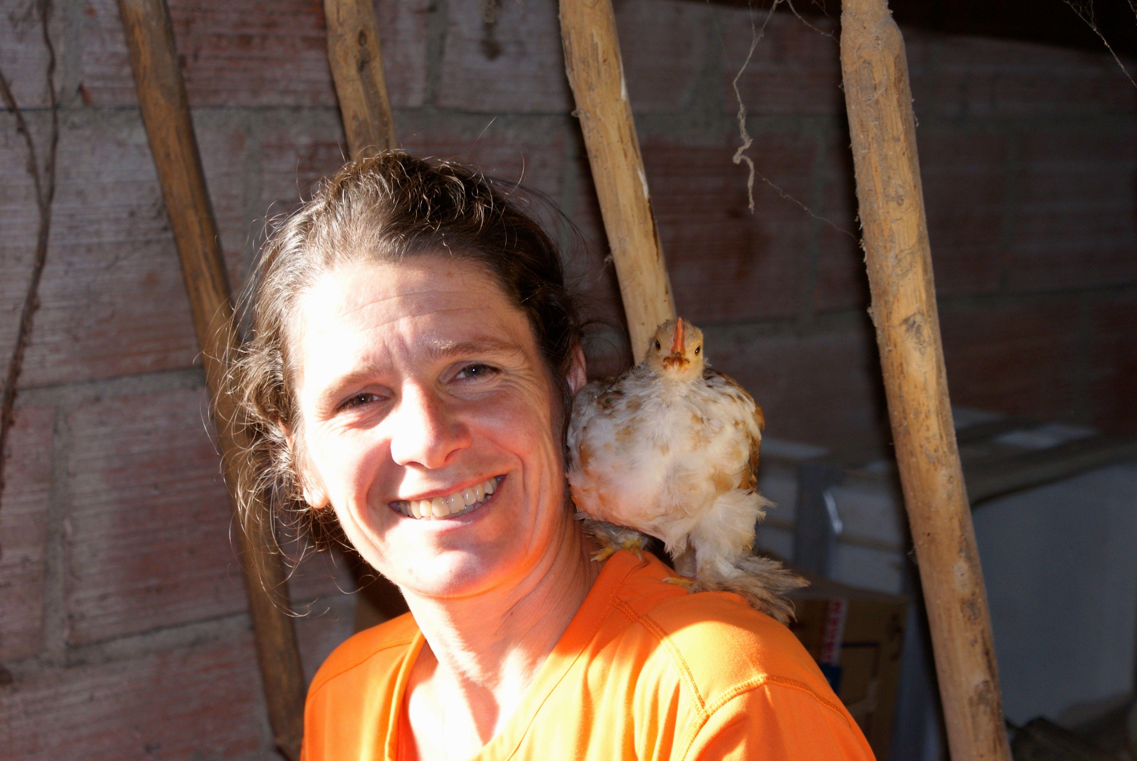 Timy, un petit poulet gai et entraînant