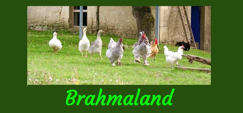 logo boutique en ligne Brahmaland