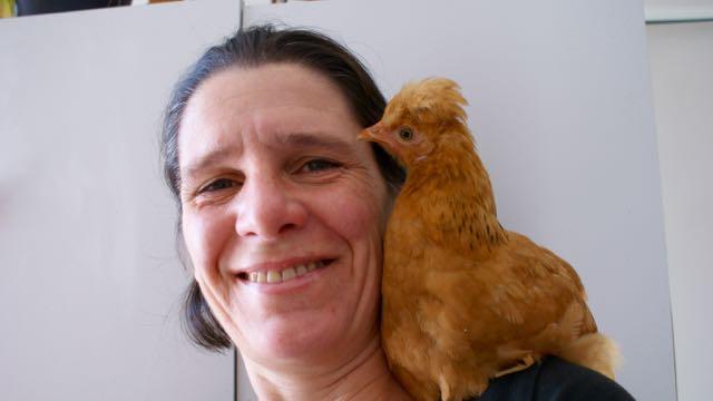 le petit poulet : animal de compagnie
