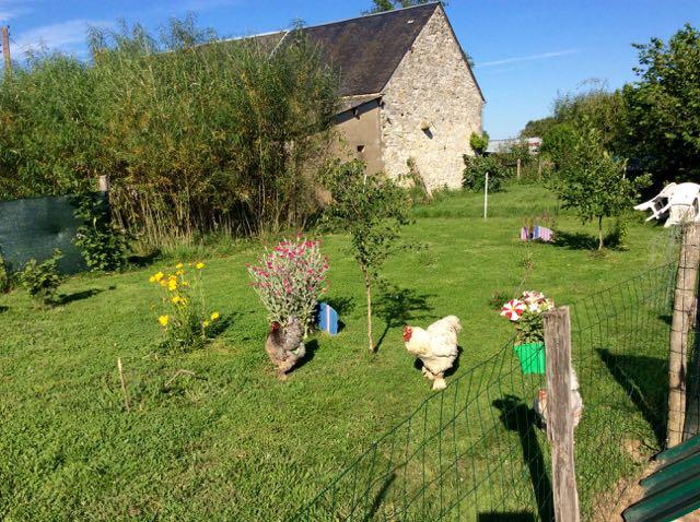 Brahmaland : le jardin des poules