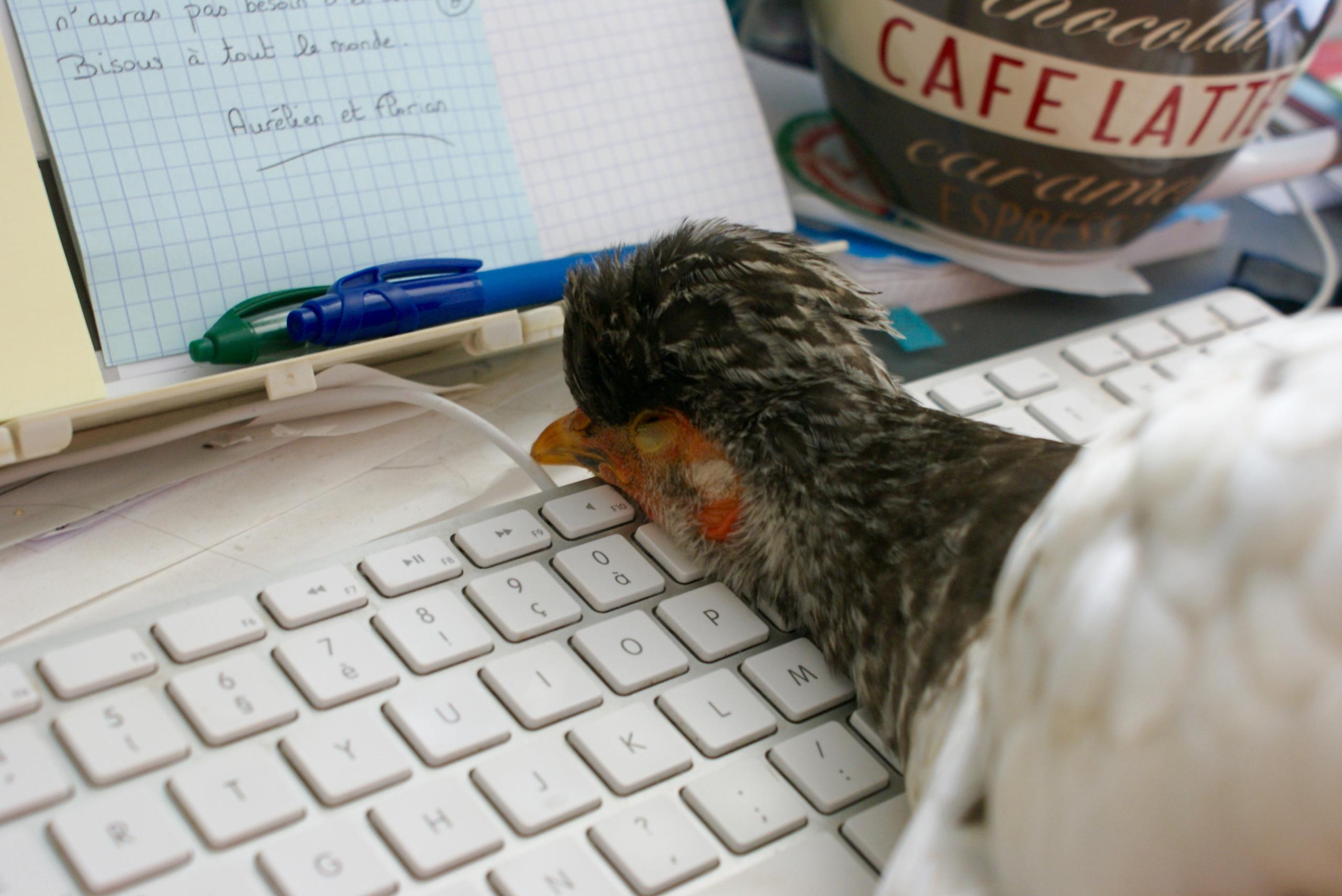 P'ang endormie la tête sur le clavier !