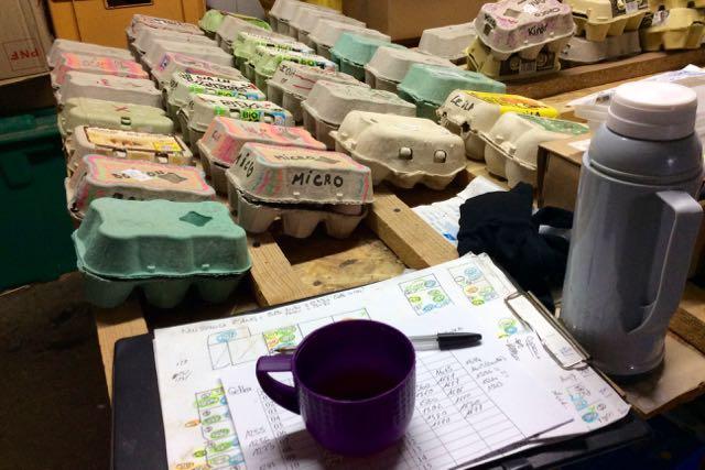 boites à œufs fécondés dans la salle de stockage